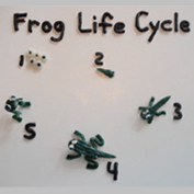 Free Science Lesson Plan Life cycle of the frog