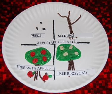 WS Apple Life Cycle for early childhood education