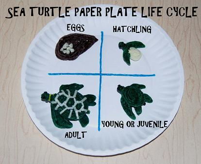 Sea Turtle Paper Plate Craft
