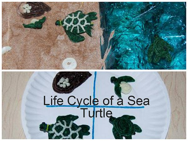 Wikki Stix Sea Turtle Life Cycle for Kids!
