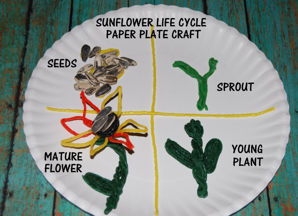 Wikki Stix Sunflower Life Cycle and Crafts for Kids!