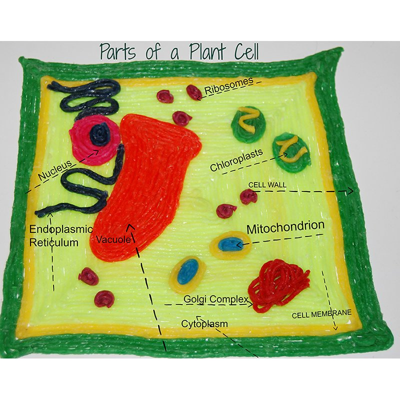 Parts of a Plant Cell Model