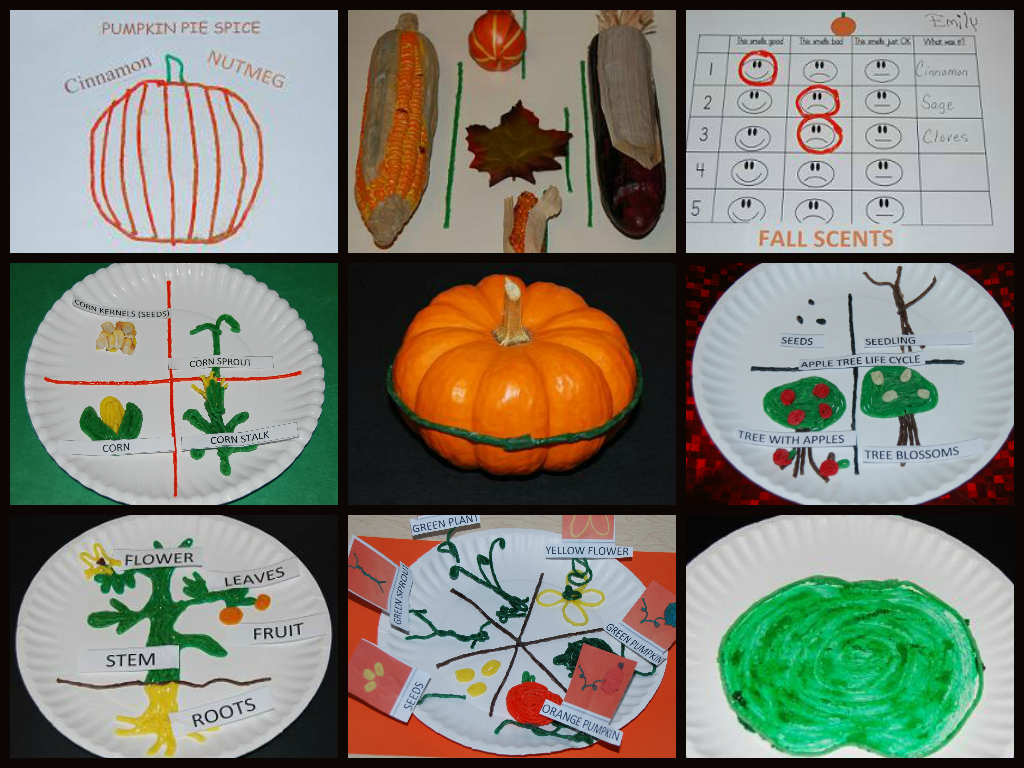 Best of Fall Science Collage here