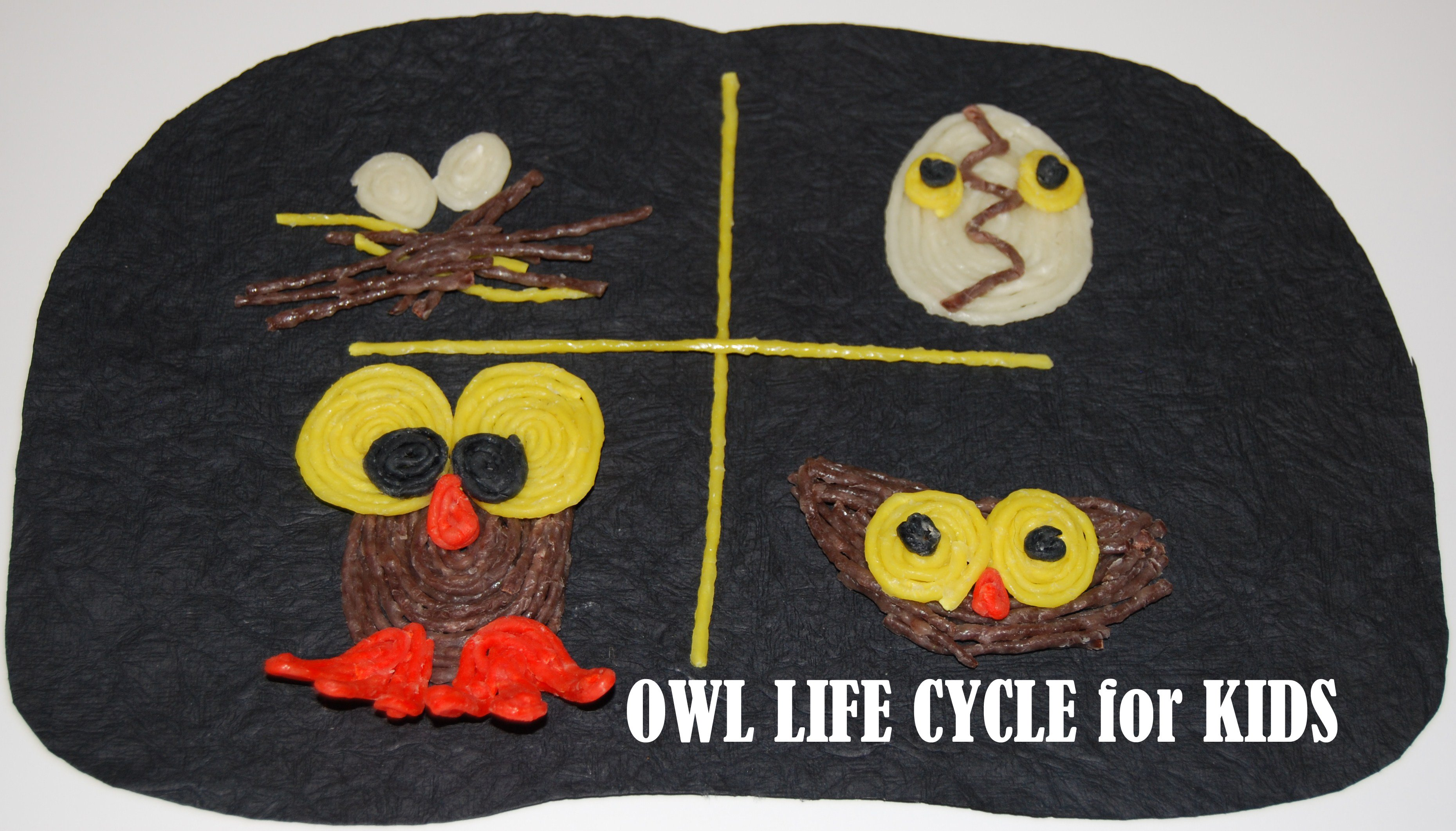 wikki stix owl life cycle sequencing cards and crafts for kids