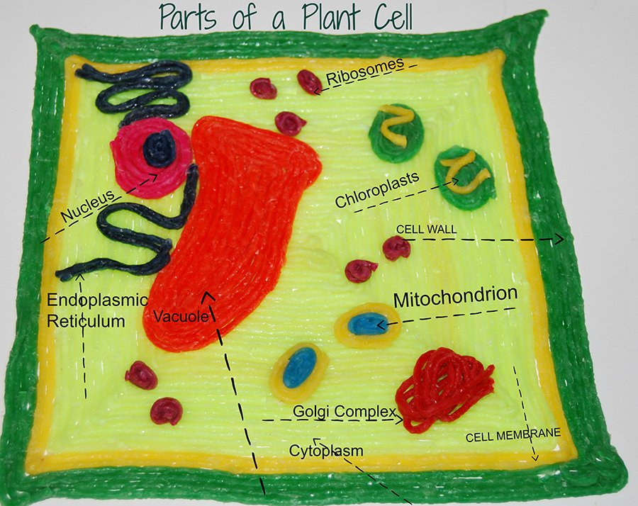 STEAM ACTIVITY - 3-D Parts of a Plant Cell