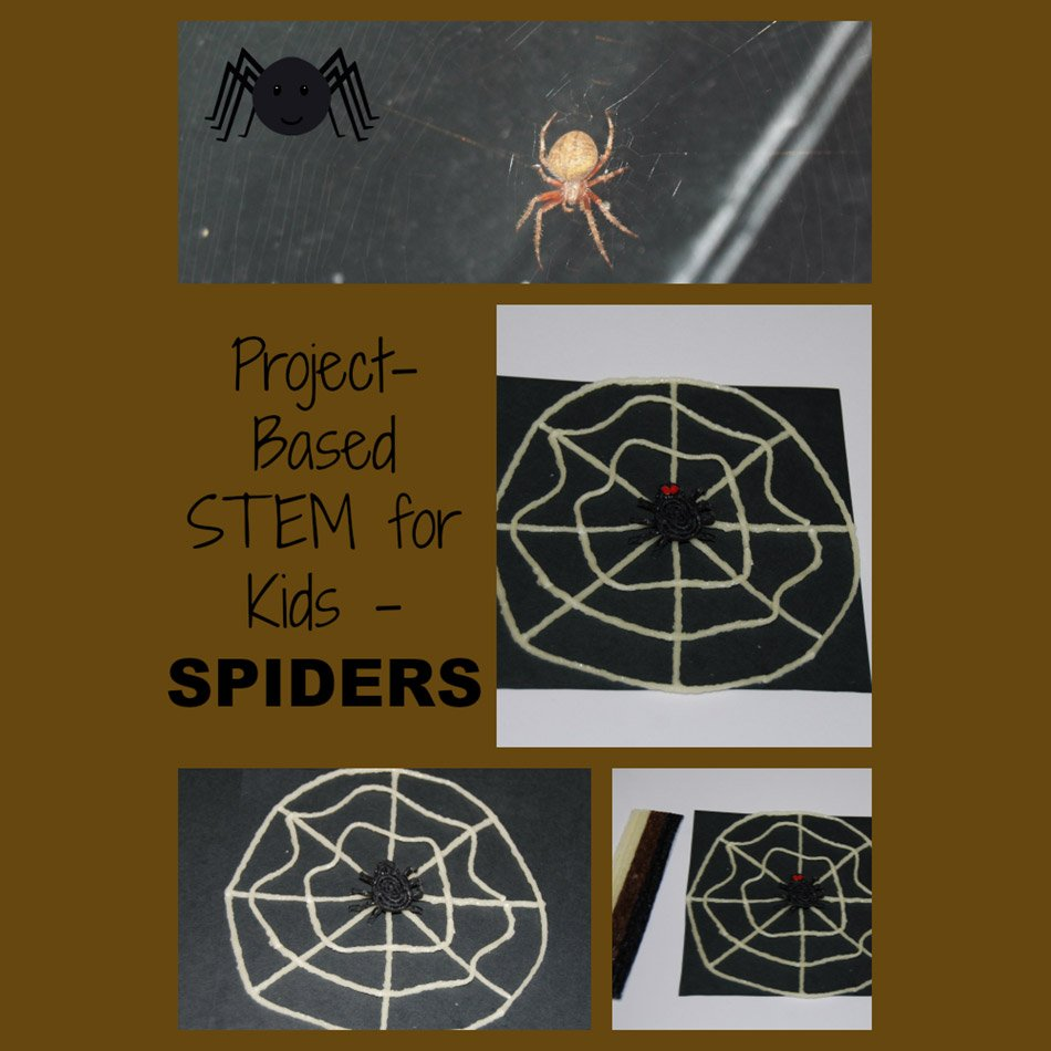 STEM Education and Project-Based Learning Lesson Plan:  Spiders!
