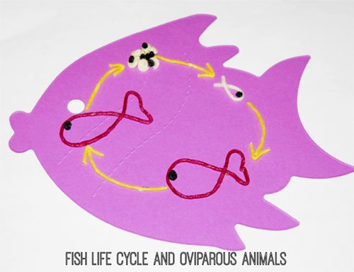 Wikki Stix Fish Life Cycle Craft
