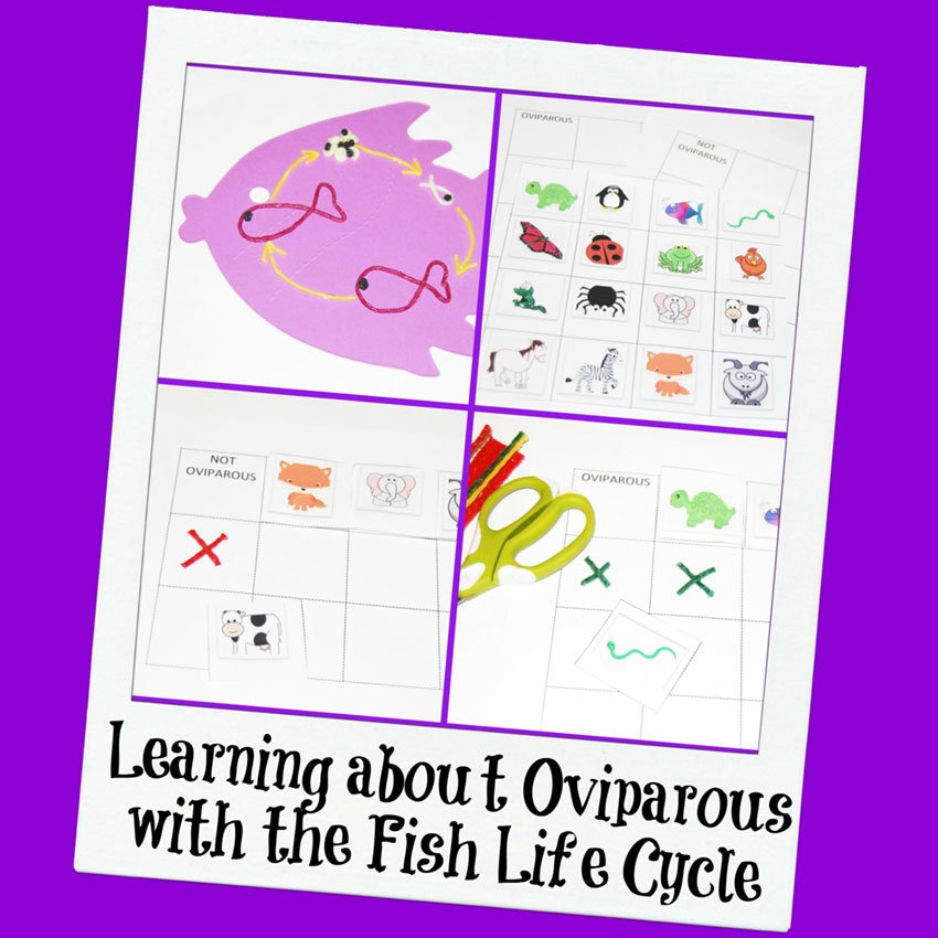Wikki Stix Fish Life Cycle Craf