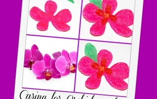 Caring for an Orchid and an Orchid Craft for Kids!