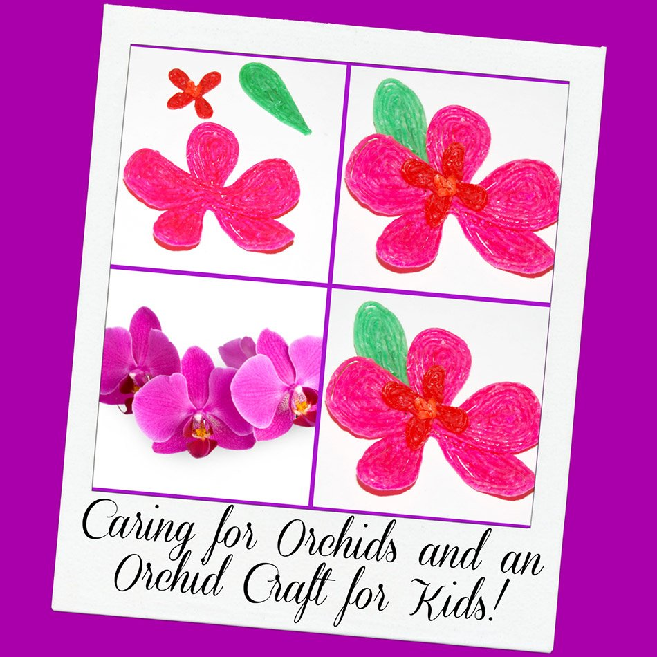 Orchids For Kids Room Kid