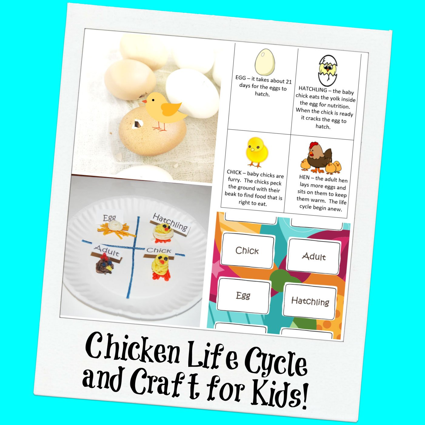 Chicken Life Cycle and a Paper Plate Craft for Kids!