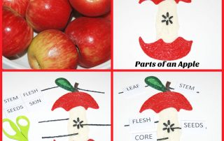Parts of an Apple Learning Craft for Kids!
