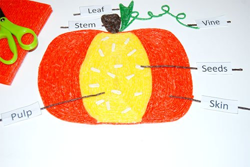 Labeling the Parts of a Pumpkin Craft