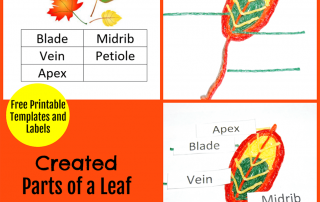 Created Parts of a Leaf Project for Kids!