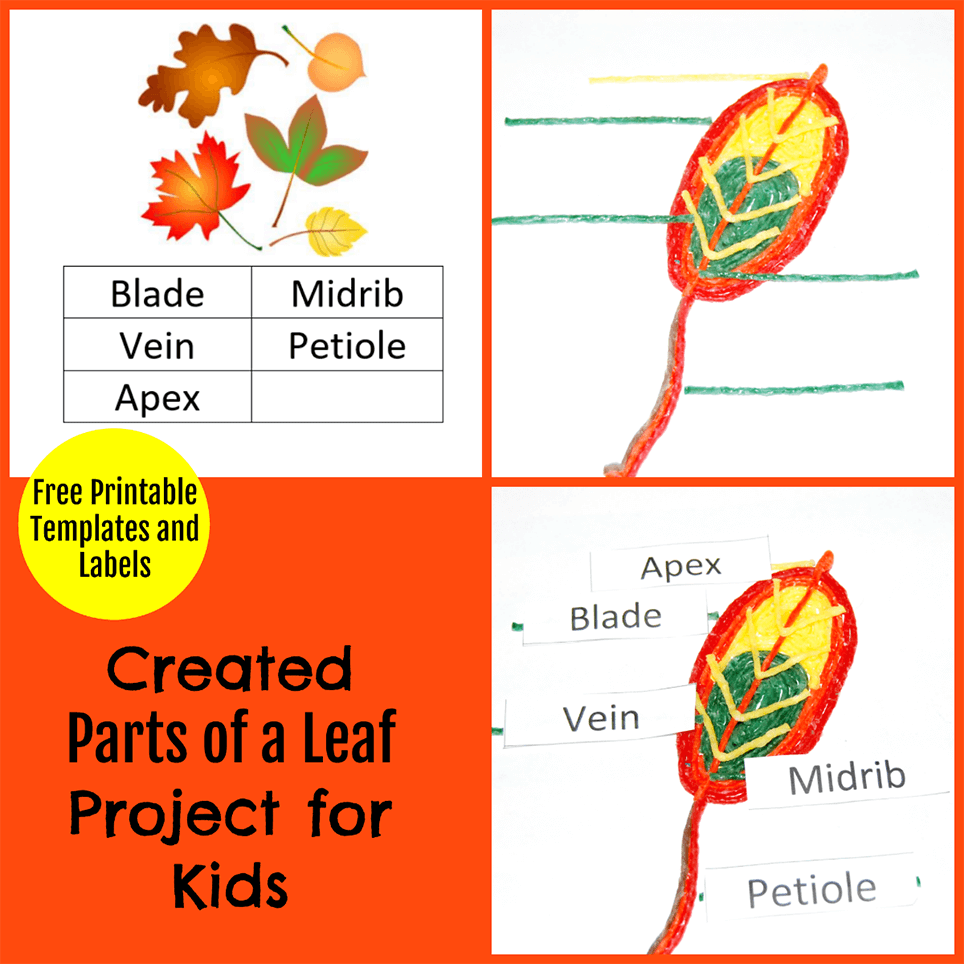 Created Parts Of A Leaf Project For Kids Wikki Stix