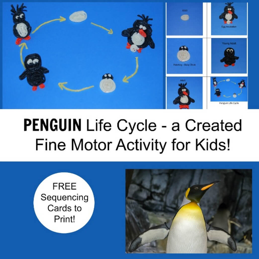 Penguin Life Cycle A Created Fine Motor Activity For Kids Wikki Stix